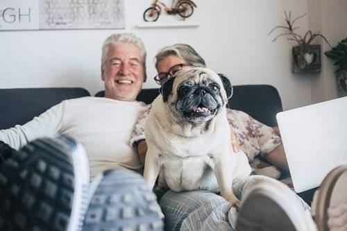 retirees with pug dog in a small home