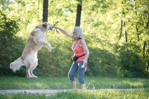 Woman playing with jumping dog outdoors